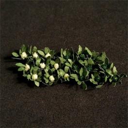 00915 - Brocolis et choux-fleurs
