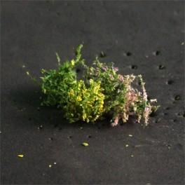 00906 - Buissons en fleurs