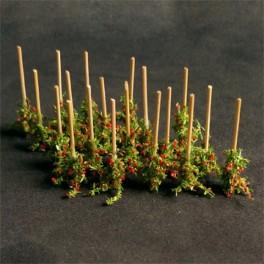 00912 - Plants de tomates