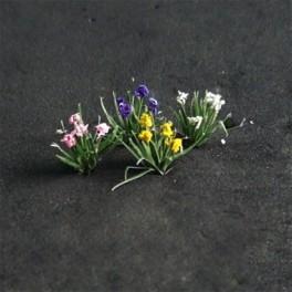 00903 - Iris