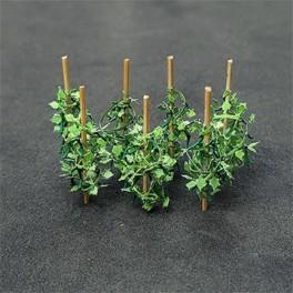00992 - Plants de concombre