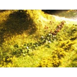 Ndetail - Rhubarbes